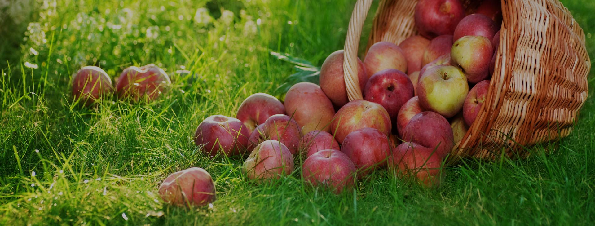 Establishing Chemical Free Gardens, Farms, Orchards and Vineyards